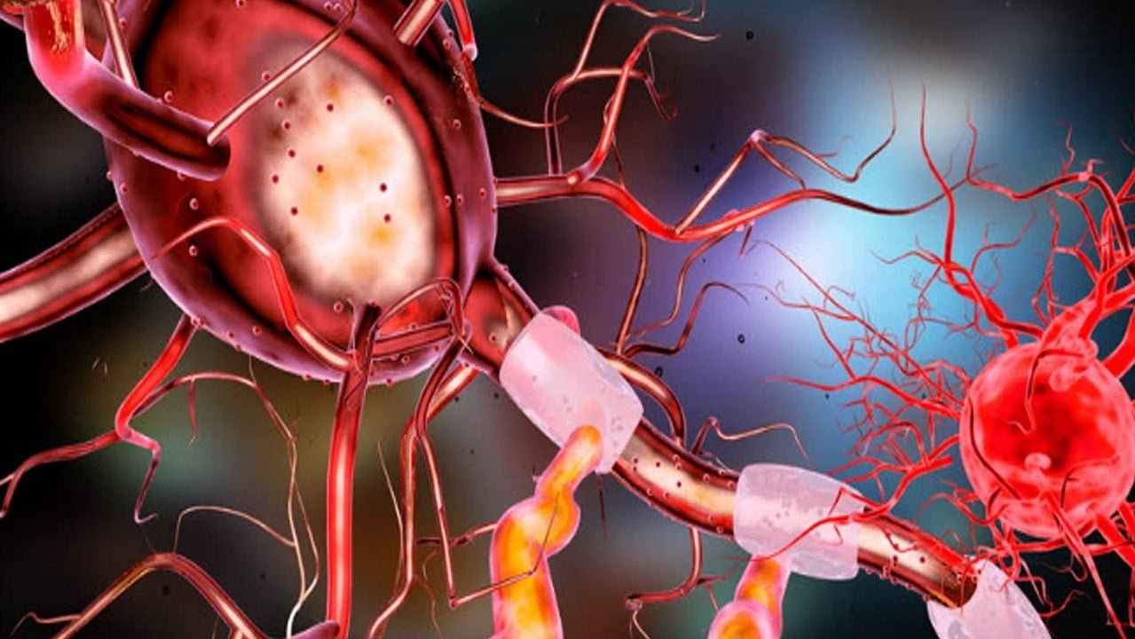 You are currently viewing Human Nervous System | Neurons | Nerve Impulse | Synapse