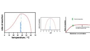 Read more about the article The Factors Affecting Enzyme Activity | Temperature, pH, Substrate