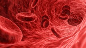 Read more about the article Blood Composition, RBC, WBC, Platelets | Blood Vessels | Blood Clotting