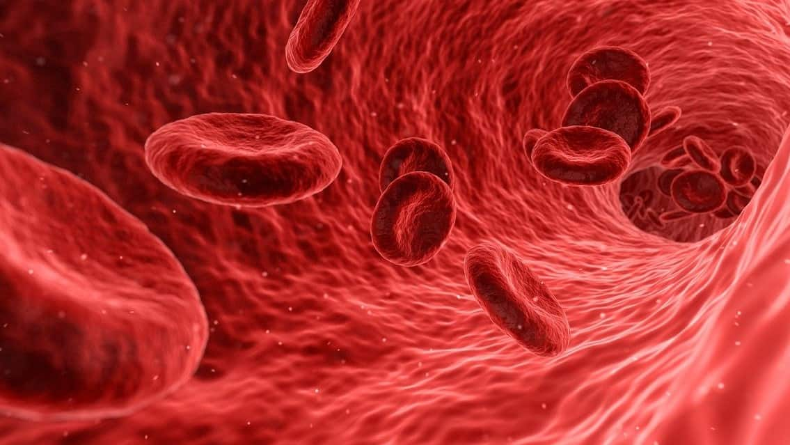 You are currently viewing Blood Composition, RBC, WBC, Platelets | Blood Vessels | Blood Clotting