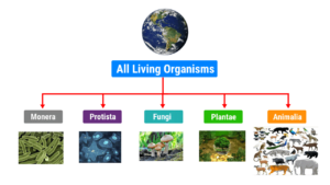 Read more about the article Biological Classification of Living Organisms