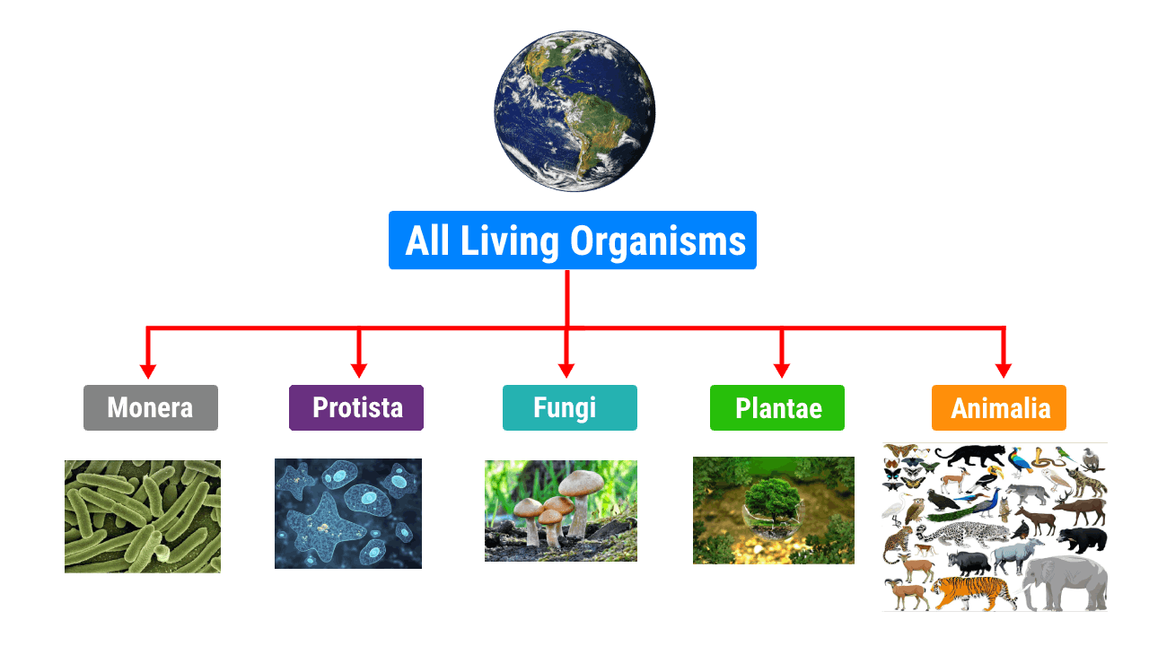 You are currently viewing Biological Classification of Living Organisms